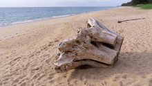 Big Driftwood On The Beach