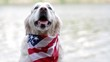 Adult dog breed Labrador posing in a bandana with the American flag