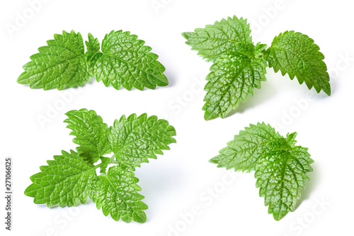 Pinturas sobre lienzo  Collection of fresh mint leaves, isolated on white background