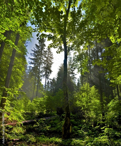 Cadres-photo bureau Route dans la forêt the sky seen among the trees in the forest in the summer