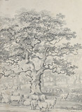 Drzewa - 271072504