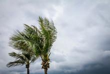 Tropical Storm Brewing