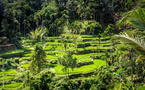 Foto op Aluminium Indonesië Rice terraces, Bali