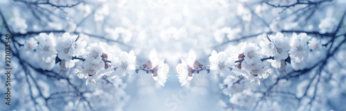 Photo Stands Floral Mysterious spring floral banner with blooming white cherry flowers blossom