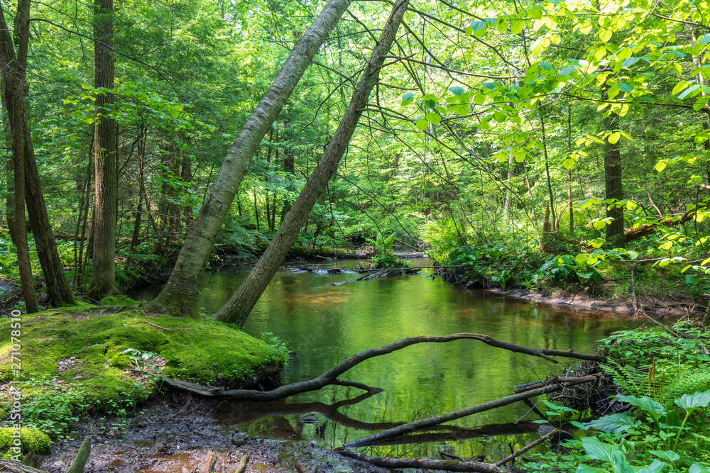 Fototapety, obrazy: Brook flowing through a lush green forest