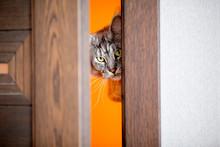 The Cat Peeks In The Door