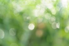 Green Blurred Bokeh Background