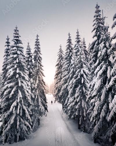 Foto auf AluDibond Dunkelgrau Winter