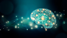 Human Brain Connexions Illustr...