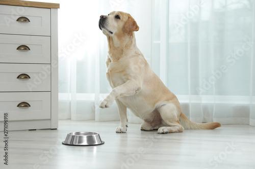 Obraz na płótnie Yellow labrador retriever with feeding bowl on floor indoors