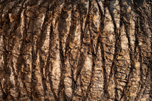 Brown Palm Tree Trunk Texture Background. Natural Organic Material.