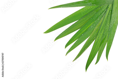 Poster Vegetal leaves of coconut isolated on white