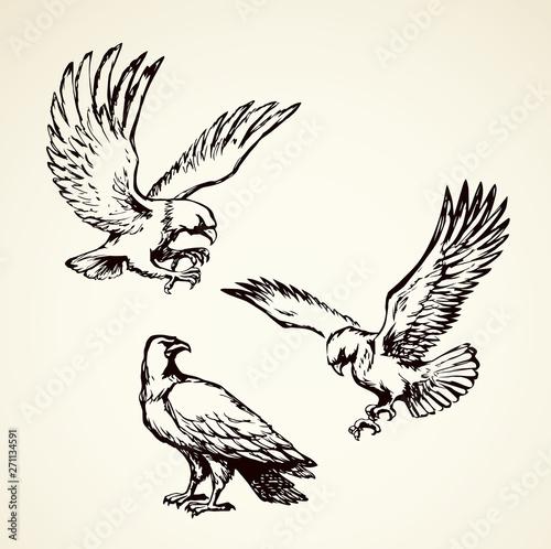 Eagle. Vector drawing Fototapete