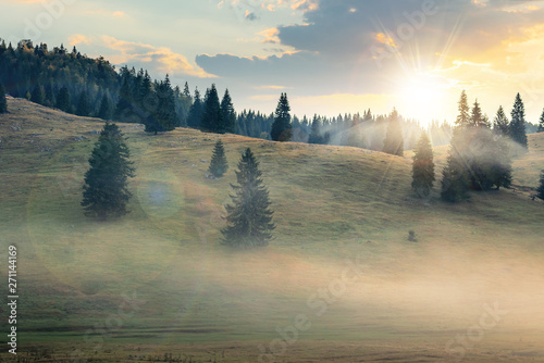 Poster Morning with fog foggy sunrise in romania countryside. spruce trees on hills. beautiful mountain scenery in autumn