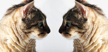Two Identical Cats Look At Eac...