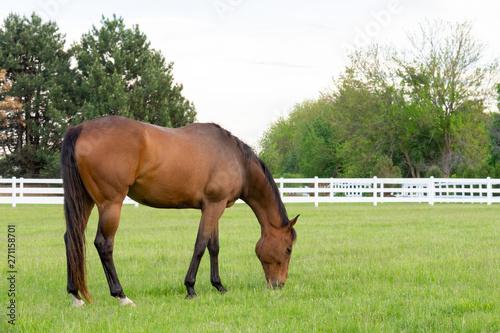 horse grazing on grass