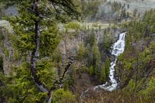 Lush Undine Falls In Yellowstone..