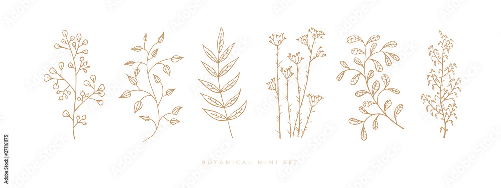 Fototapeta Set hand drawn curly grass and flowers on white isolated background. Trendy wildflowers and herbs. Botanical illustration. Decorative floral picture.