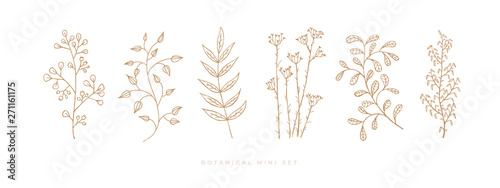 Vászonkép Set hand drawn curly grass and flowers on white isolated background