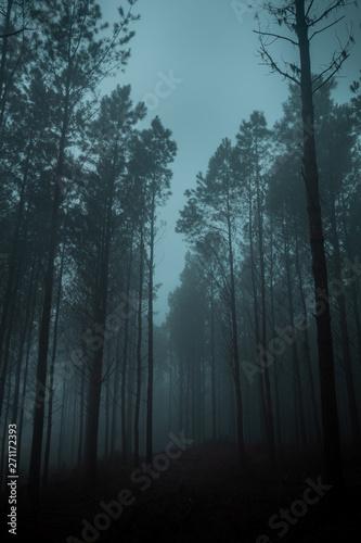 Photo Dark forest