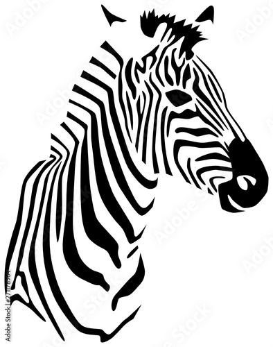 Zebra - 271178964