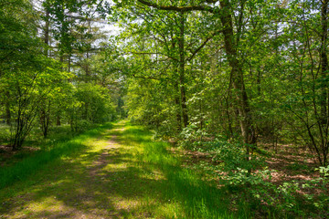 Fototapeta na wymiar Path in a sunny forest in sunlight in spring