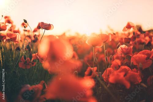Fotografia  Campo di papaveri rossi
