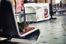 At The Railway Station In The Hall Waiting On The Bench Is A Homeless Cat Tramp Resting
