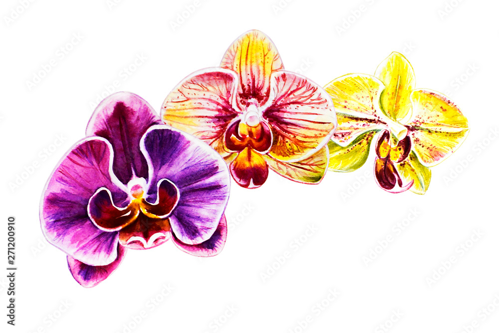 Fototapety, obrazy: Tree beautiful colorful orchid flowers. Watercolor painting. Exotic plant. Floral print. Botanical composition. Wedding and birthday. Greeting card. Flower painted background. Hand drawn illustration.