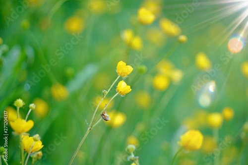 In de dag Narcis yellow flower plant in the nature in summer, yellow flowers in the garden