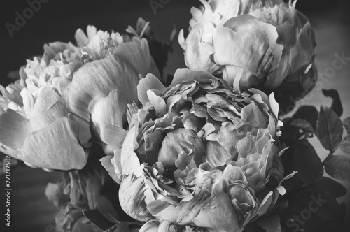 Fototapety, obrazy: Fresh bunch of three pink peonies roses flowers. Pastel floral wallpaper.