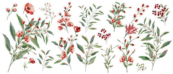 FototapetaWatercolor illustration. Botanical collection of wild and garden plants. Set: leaves flowers, branches, herbs and other natural elements. All drawings isolated on white background. Red flower.