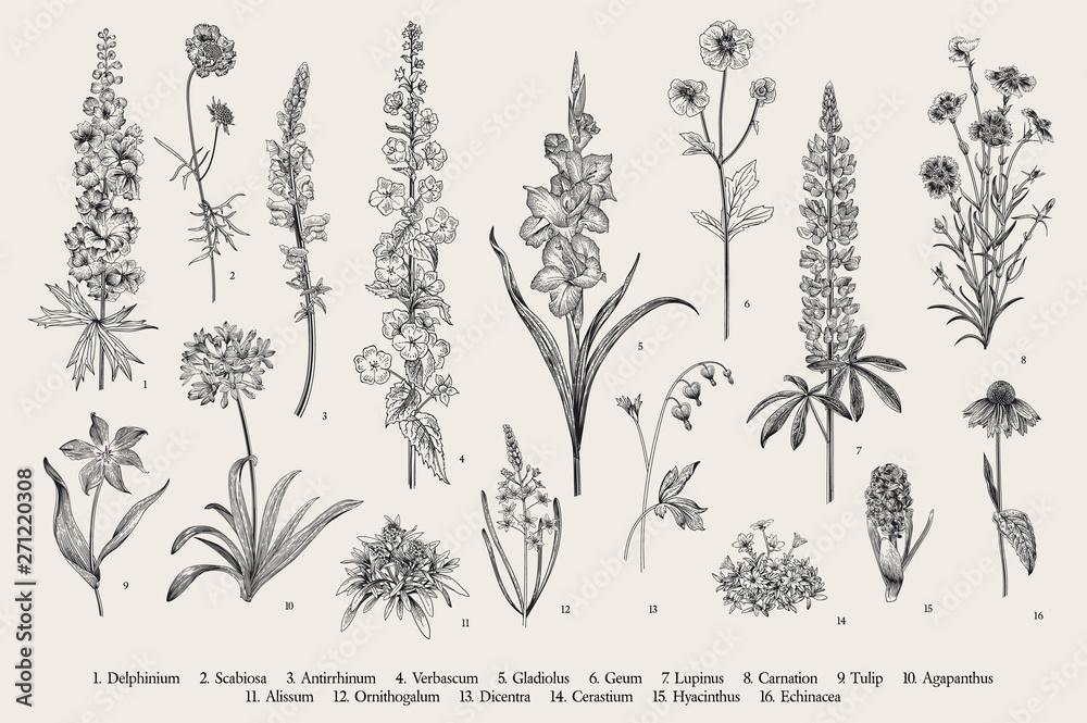 Fototapety, obrazy: Garden flowers. Set. Vintage vector botanical illustration. Black and white