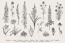 Garden Flowers. Set. Vintage V...