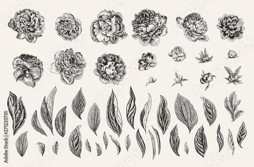 Photo  Vintage vector botanical illustration