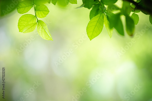 Photo sur Aluminium Arbre Closeup nature view of green leaf on blurred greenery background in garden with copy space for text using as summer background natural green plants landscape, ecology, fresh wallpaper concept.