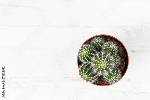 Photo sur Aluminium Montagne Cactus in flower pot on white, top view.