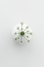 Overhead View Of Cow Parsley In Vase