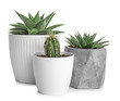 Green succulents in pots on white background
