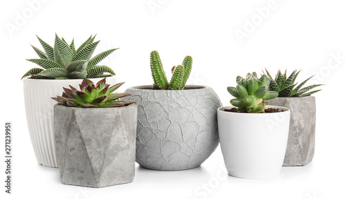 Papiers peints Cactus Green succulents in pots on white background