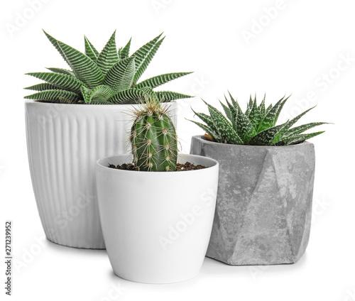 Fotografia Green succulents in pots on white background