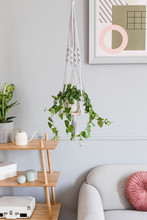 Close Up Of Handmade Macrame Shelf Planter Hanger For Indoor Plants, Rattan Shelf, Gray Sofa, Poster And Elegant Accessories. Cozy Home Decor. Stylish And Minimalistic Boho Interior Of Living Room.
