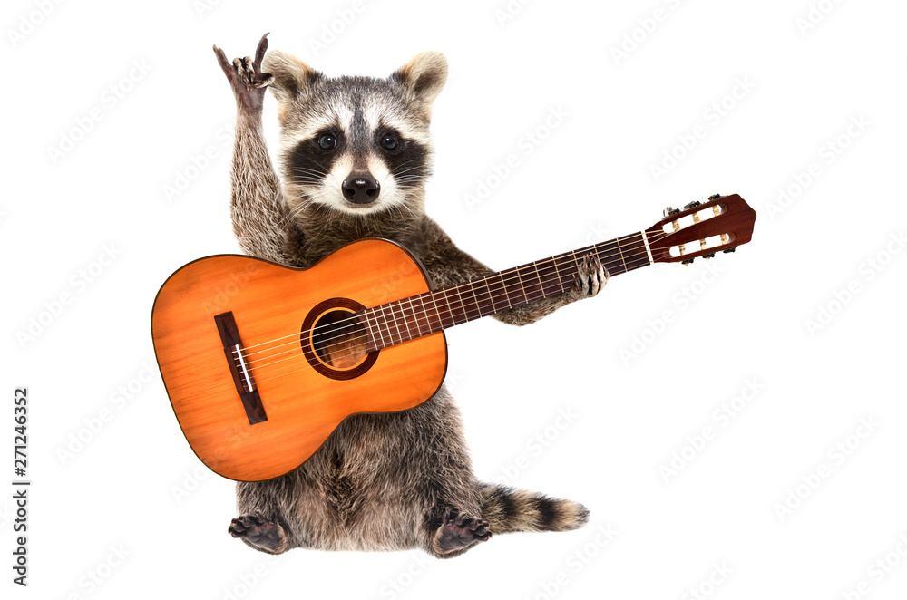 Fototapety, obrazy: Funny raccoon with  acoustic guitar, showing a rock gesture, isolated on white background