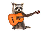 Fototapeta Zwierzęta - Funny raccoon with  acoustic guitar, showing a rock gesture, isolated on white background