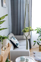 Stylish And Boho Home Interior Of Living Room With Wooden Shelf, Gray Sofa, Design And Elegant Accessories, Hand Made Macrame Shelf Planter Hanger. Botany And Minimalistic Gray Home Decor With Plants.