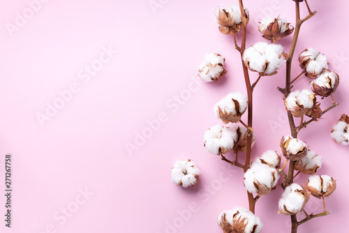 Tuinposter Magnolia Cotton flower branch on pink background with copy space. Top view. Flat lay. Flowers composition. Cozy winter and organic lifestyle concept. Banner
