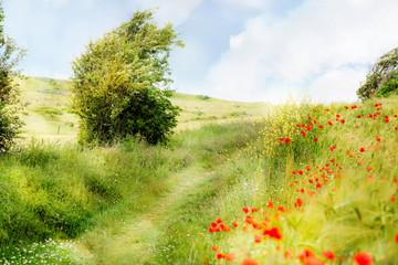 Fototapeta Wiejski chemin de promenade au printemps