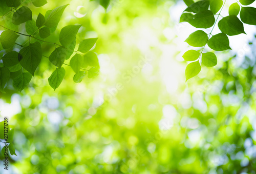 Fotografía  Close up beautiful view of nature green leaves on blurred greenery tree background with sunlight in public garden park