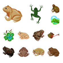Vector Illustration Of Frog An...