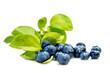 canvas print picture - Blaubeeren oder Kulturheidelbeeren mit Blättern, freigestellt vor Weiß